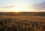 THIS PHOTO IS AVAILABLE FOR WEB DOWNLOAD ONLY. PLEASE CONTACT US FOR A LARGER PHOTO.. Idaho. Lewiston. AG - wheat fields, sunrise - clouds, summer - morning