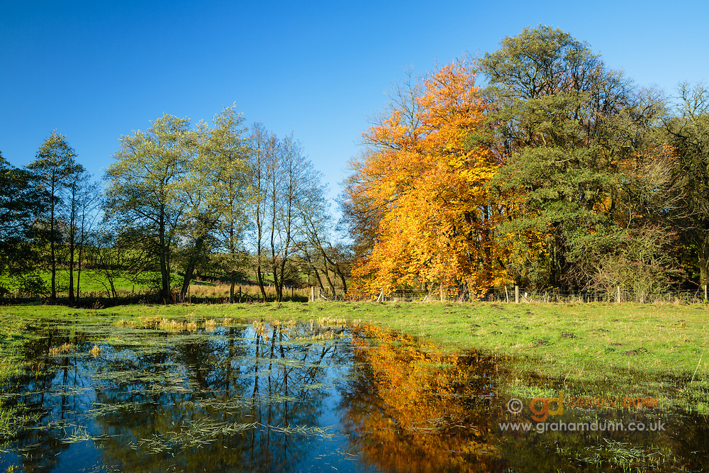 Bright autumn colours reflect in a flooded field alongside Beresford Dale in the Peak District National Park. Derbyshire Staffordshire border, England, UK. November.