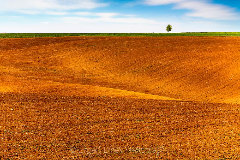 Brown spring fields