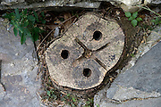 tree stump in a backyard