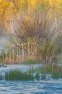 Taylor Creek, near South Lake Tahoe, El Dorado County, California