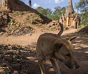 A stray dog roams the ruins of Nyaung Oak, Myanmar.