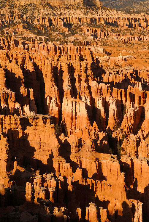 The pinnacles of the Bryce canyon in the light of the sinking sun!
