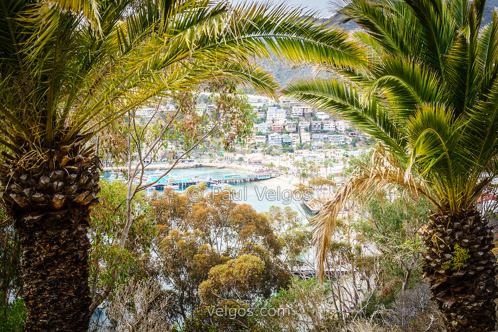 Avalon California city through palm trees with the Green Pleasure Pier and downtown Avalon waterfront businesses.  Catalina Island is a popular travel destination off the coast of Southern California in the United States.