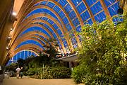 Winter Gardens at Night, Interior, Sheffield City Centre, UK. Architect: Pringle Richards Sharratt