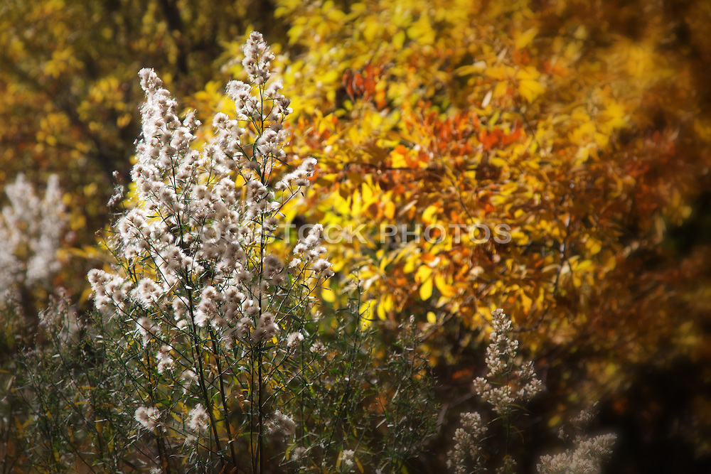 Fall Colors at Zion National Park Utah