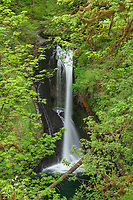 Lower Butte Creek Falls Cascade Range Oregon