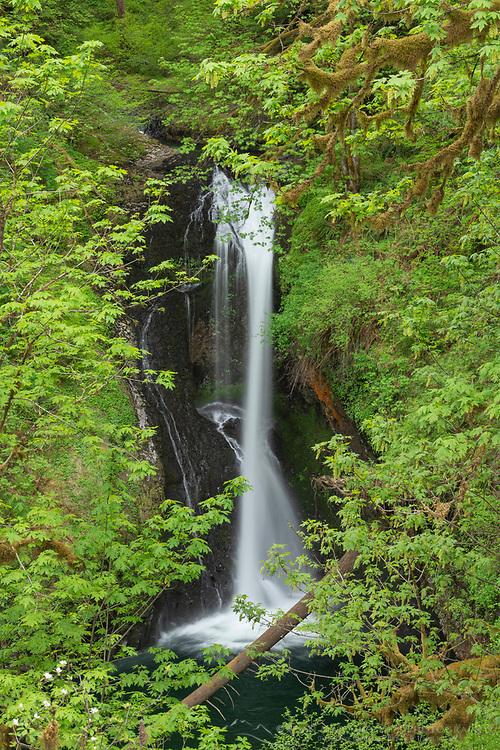 Lower Butte Creek Falls Cascade Range Oregon