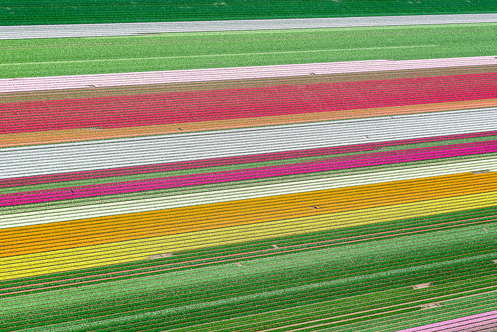 Nederland, Flevoland, Zeewolde, 07-05-2015; Zuidelijk Flevoland, tussen Zeewolde en Almere. Bloembollenvelden met tulpen en hyacinten.<br /> Southern Flevoland, Bulb fields of tulips and hyacinths.<br /> luchtfoto (toeslag op standard tarieven);<br /> aerial photo (additional fee required);<br /> copyright foto/photo Siebe Swart