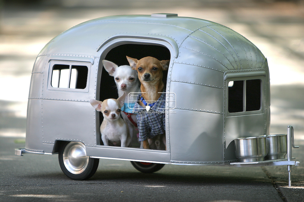 16th August 2005, New York, NY.  'Pet Camper', designed by Straight Line Designs Inc. sells for $2500.  The tiny dog trailer is a retro design made of fiberglass with aluminum hitch and wheels, shaped like a vintage trailer camper that can be accessorized with cushions and doggy toys. Pictured in trailer: Bonbon (brown dog), Vanilla (white dog) and Tequila (Baby).   ..PHOTO © JOHN CHAPPLE / WWW.JOHNCHAPPLE.COM