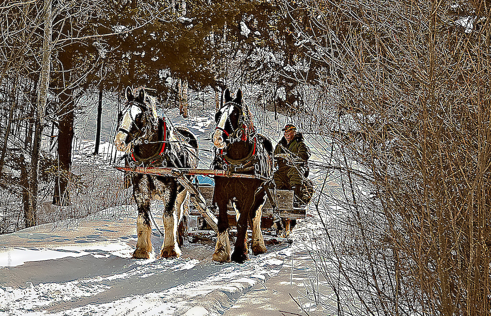 candid action shot : winter scene of cydesdale horses in harness