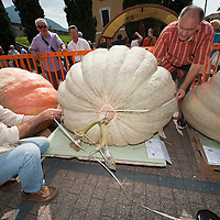BRESCIA, ITALY - SEPTEMBER 12:  Officials measure one of the giant pumpkins during this year competition at Sale Marasino on September 12, 2010 in Brescia, Italy.  Cutrupi Stefano of Radda in Chianti, won  this year Italian National Competition with his pumpkin weighing  507 Kg.