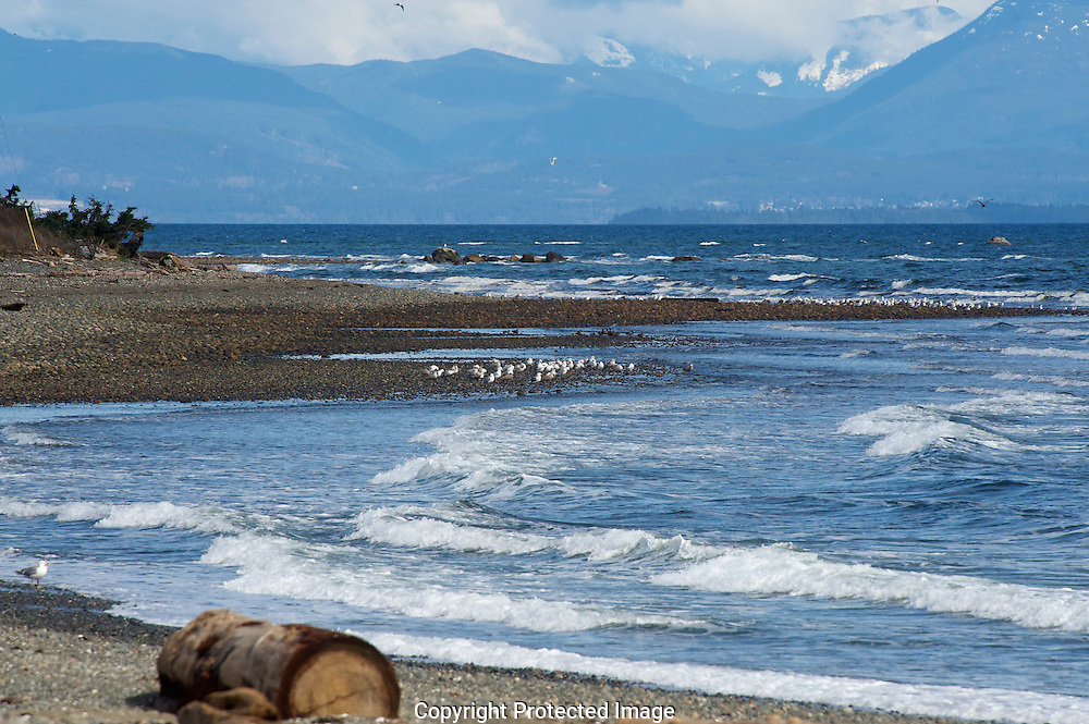 Point Homes, Vancouver Island., Courtenay, British Columbia, Canada, Isobel Springett
