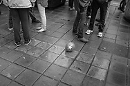 BELGIUM, Brussels; 1/05/2014: Balloon from the PTB (Belgian Worker's Party) during a demonstration by extreme Left groups on Labour Day.