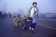 Germany, Lower Saxony, Leer, livestock market, the livestock market in Leer is the oldest and biggest in Europe, dealer with miniature ponnies.....Deutschland, Niedersachsen, Leer, der Viehmarkt von Leer ist der groesste und aelteste in Europa, Haendler mit Zwergponnys.....