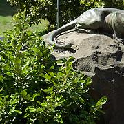 Cougar sculpture. San Francisco, California. USA.