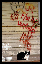 21st, December 2005. New Orleans, Louisiana. 'Cat outside.' Rescue workers graffiti lingers on the walls of the devastated Lower 9th Ward long after the devastating flood from Hurrican Katrina subsided. Abandoned cats peer suspiciously from the streets.