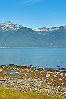 Haines Beach and Harbor Panorama. Image 4 of 11 images taken with a Nikon D300 camera and 18-200 mm VR lens (ISO 400, 34 mm, f/11, 1/500 sec). Raw images processed with Capture One Pro. Composite panorama created using AutoPano Giga.