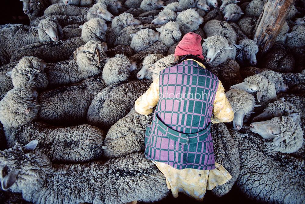 Buryat woman with sheep, Ovalau Island, Lake Bailkal, Russia