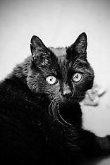 Ichiro - Cat