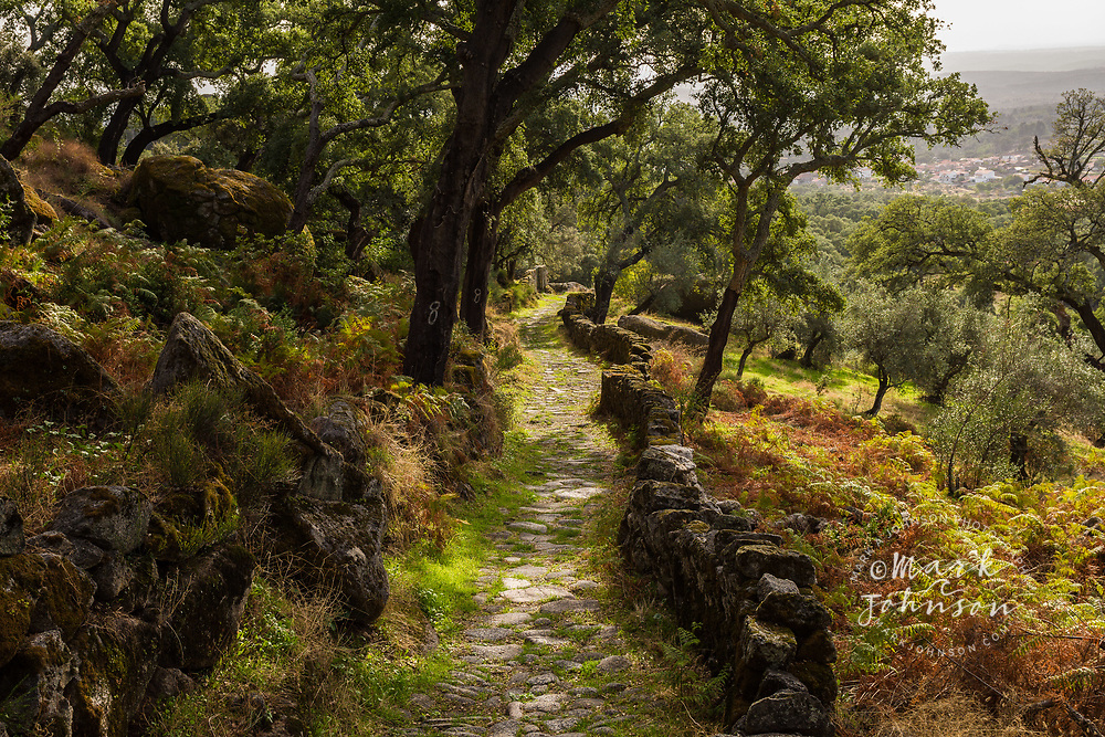 A Roman Road & cork trees near Monsanto, Portugal