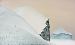 Kelp Gull (Larus dominicanus) on ice berg in Antarctica