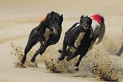 Greyhound Racing, Towcester Racecourse Saturday 21st January 2017