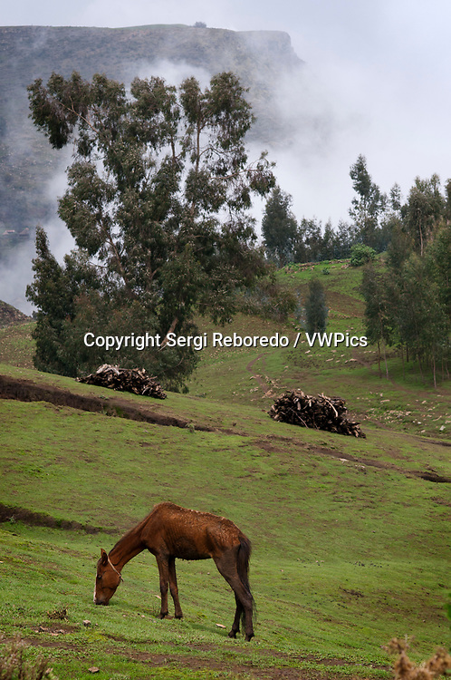 "Simien Mountains National Park, Amhara region, North Ethiopia. A horse grazes in a valley of the Simien mountains. It may not go so misleading. The Simien Mountains (which in Amharic means ""North""), Unesco's World Heritage Site, with its 180 square kilometers of unique beauty, is the territory of the endemic cold baboons."