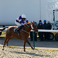 Lingfield 20th February 2013