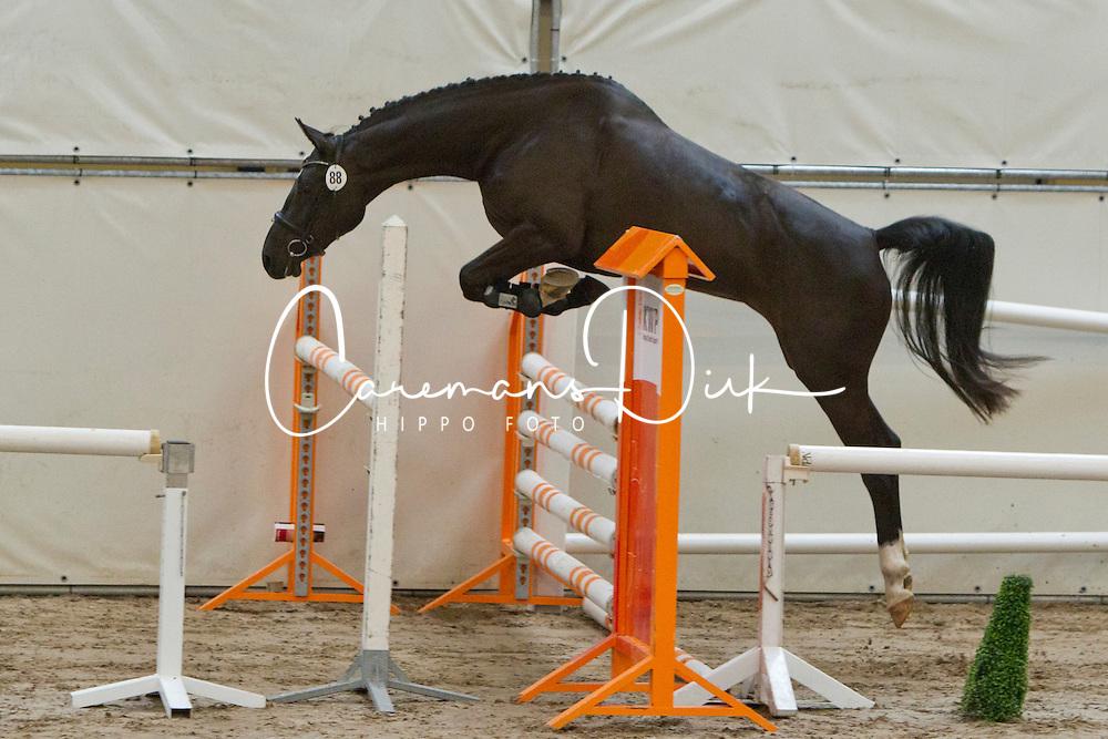 88 - D.Amelusina<br /> KWPN Paardendagen 2011 - Ermelo 2011<br /> © Dirk Caremans