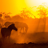 Africa, Botswana, Makgadikgadi Pans National Park, Sunset behind herd of Plains Zebra  (Equus burchelli) along Botete River