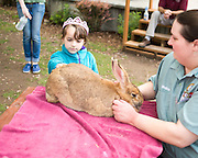 Group of children taking turns to pet the giant rabbit.