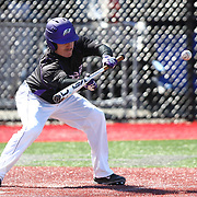 Kevin Paulsen #7 of the Niagara Purple Eagles lays down a bunt during the game at Friedman Diamond on March 16, 2014 in Brookline, Massachusetts. (Photo by Elan Kawesch)