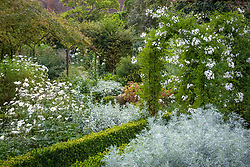 The White Garden at Sissinghurst Castle with Solanum  jasminoides 'Album' growing over an arch. Low box hedges