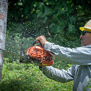 JULY 19, 2018----UTUADO, PUERTO RICO---<br /> A crew member from  the Puerto Rico Electric Power Authority cuts down a tree while restoring power to a single family home.<br /> (Photo by Angel Valentin/Freelance)