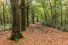Laapersbos GNR, Hilversum, Noord Holland, Netherlands