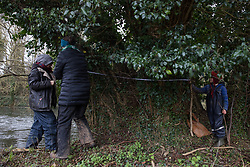 Denham, UK. 4 February, 2020. Activists from Save Colne Valley and Extinction Rebellion and a child record the measurements and location of a 11.6m-wide ancient alder tree in an area designated for the HS2 high-speed rail link next to the river Colne in Denham Country Park. Planned works in the immediate vicinity are believed to include the felling of 200 trees and the construction of a roadway, Bailey bridge, compounds, fencing and a parking area. A wetland nature reserve forming part of a Site of Metropolitan Importance for Nature Conservation (SMI) lies on the far bank. Credit: Mark Kerrison/Alamy Live News