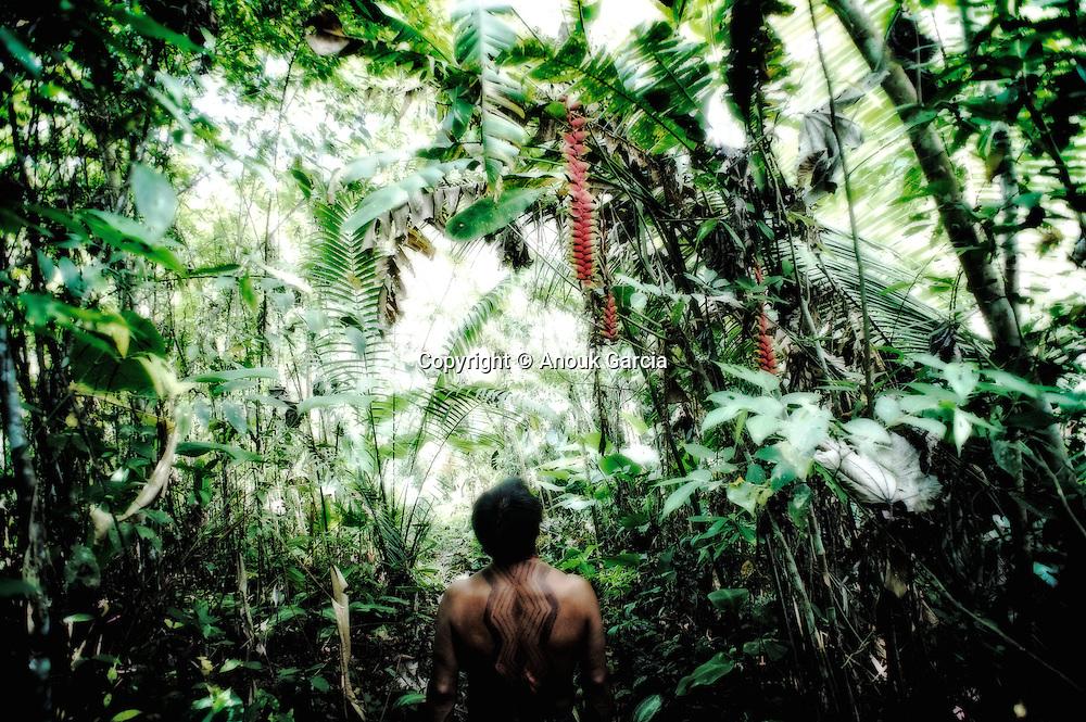 Forêt primaire et fleure de balisier avec Tika Yawanawa. | Floresta primaria com Tika Yawanawa.