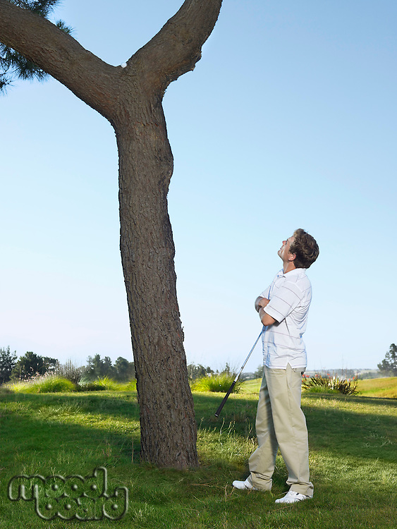 Golfer looking for ball in tree