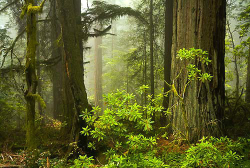 Del Norte Coast Redwood State Park, California