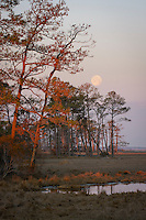 Moon over the marsh at Chincoteague National Wildlife Refuge, Virginia, USA