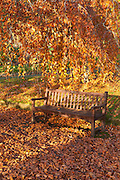 Park bench in golden leaves