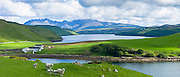 The Cuillin mountain range with croft farm, sheep and Loch Harport near Coillure on Isle of Skye in the Highlands and Islands of Scotland