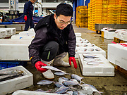 09 OCTOBER 2018 - SEOUL, SOUTH KOREA: A worker sorts fish before the auction in the Noryangjin Fish Market. The auctions start about 01.00 AM and last until 05.00 AM. Noryangjin Fish Market is the largest fish market in Seoul and has been in operation since 1927. It opened in the current location in 1971 and was renovated in 2015. The market serves both retail and wholesale customers and has become a tourist attraction in recent years.           PHOTO BY JACK KURTZ