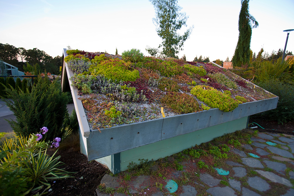 The Oregon Garden in Silverton, Oregon.  With help from the City of Portland and the non-profit EcoRoofs Everywhere, the Oregon Garden built its first green-roof on June 12, 2004. Housed on a filter pump station that is set into the side of a hill, the roof allows Garden visitors an up close look at the construction and plants on the roof. The roof is divided into several plots with different growing media, which is one of the critical factors in green-roof success, according to the latest research.  A mix of drought-tolerant plants grow on top of the building. Eco roofs can perform many environmental benefits: reduction of storm-water run-off, improvement of water quality of roof run-off; replacement of habitat lost when the structure was built, reduction of energy costs inside the building and extension of the roof's life-span.