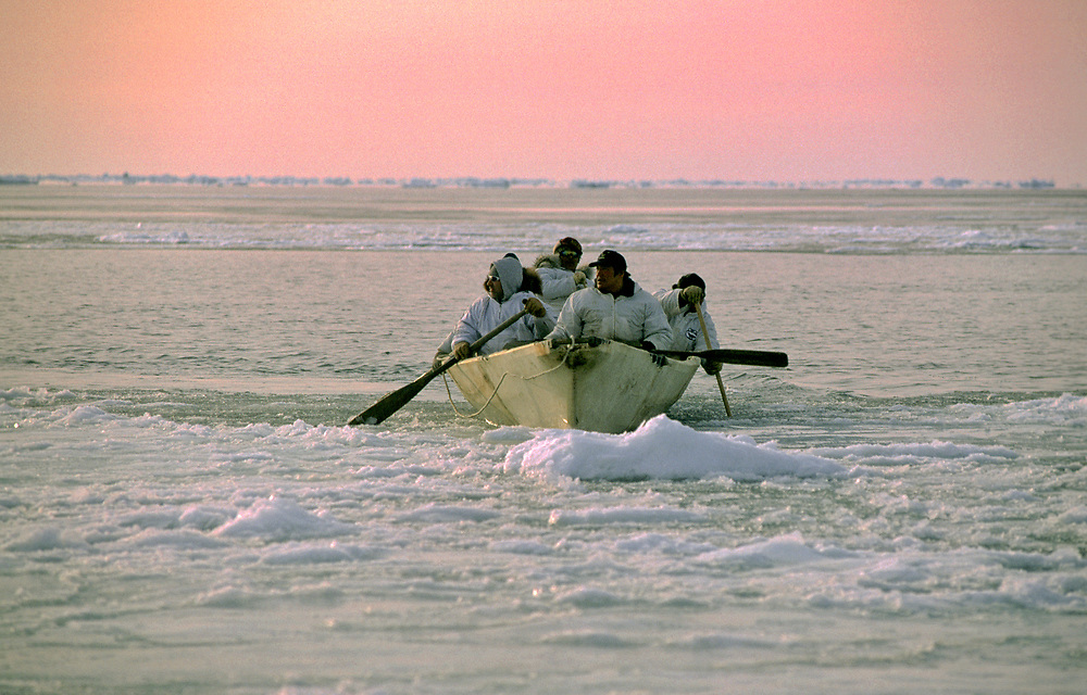 Alaska Native whalers paddling a traditional boat or umiak on the Chukchi Sea during the spring whale hunt near Barrow