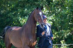 Juan Antonia Real Garcia, (ESP), Bamaro, Corne, Polo, Vitales, Wanted - Horse Inspection Driving - Alltech FEI World Equestrian Games™ 2014 - Normandy, France.<br /> © Hippo Foto Team - Leanjo de Koster<br /> 25/06/14