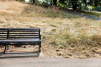 Empty park bench at park