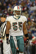 Dolphins linebacker Junior Seau (6 tackles, 1 assist) and the Miami defense had a great day stopping the Bills offense with 6 sacks and 1 interception for a touchdown during a 20 to 3  win by the Miami Dolphins over the Buffalo Bills in an NFL Week 16 game in Buffalo on December 21, 2003. ©Paul Anthony Spinelli