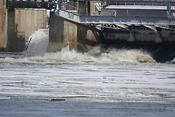 07 February 2007:  Birds at Starved Rock State Park in Illinois gather just below the locks to find open water for food.  Birds include the American Bald Eagle, Canadian Geese, and Gulls.